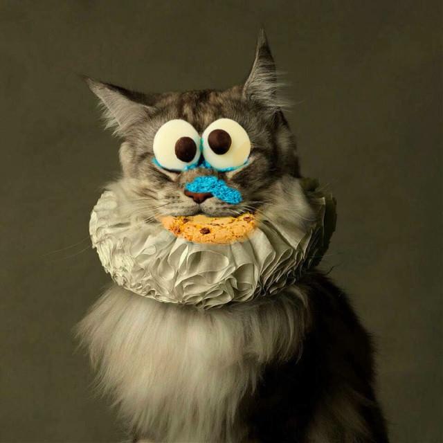 #FreeToEdit #cats #cookies #fun #weekend