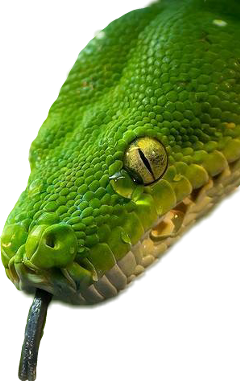 sticker snake head green eye