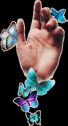 butterflies hand butterfly