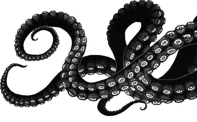 bw tentacles drawing pinterest tentacle octopus