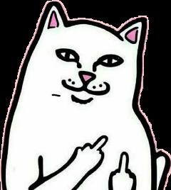 gato cat grosero xd fuck