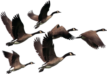 birds#flying freetoedit birds flying