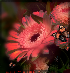 butterfly colorful red @csefi flower freetoedit