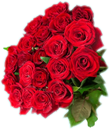 #FreeToEdit #flowers #roses #foryou #thankyou my #ftestickers