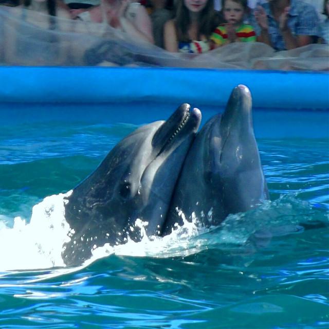 #FreeToEdit #dolphin #dolphins #dolphinarium  #zoo #beautiful #blau
