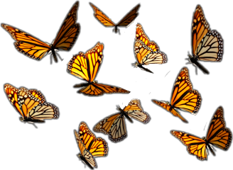 nature insects butterflys orange freetoedit
