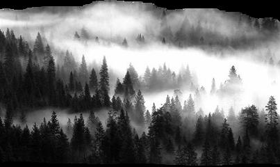 sticker landscape trees fog blackandwhite