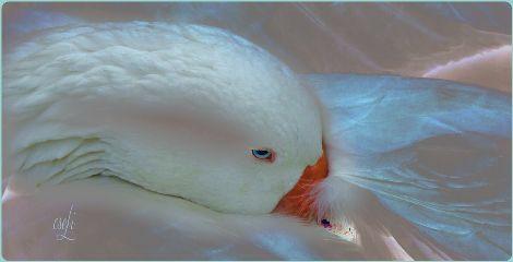 gooseart white @csefi petsandanimalslove magical