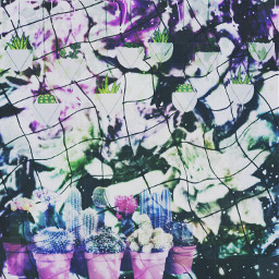 succulents plants plantsaesthetic aesthetic aestheticedit