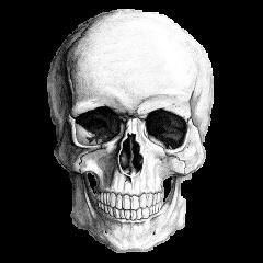 skull calavera freetoedit