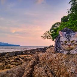 cats chill holiday sea sky freetoedit