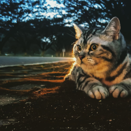 cats chill holiday tree roadtrip freetoedit