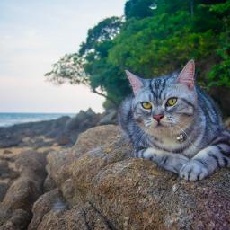 freetoedit cats chill holiday sea