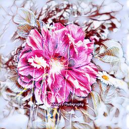 freetoedit myeditedphoto remixme flowershot doublexposure