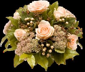 beautiful rose roses flowersfollower nature