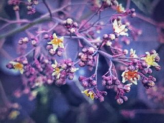 tiny flowers spring photography purple
