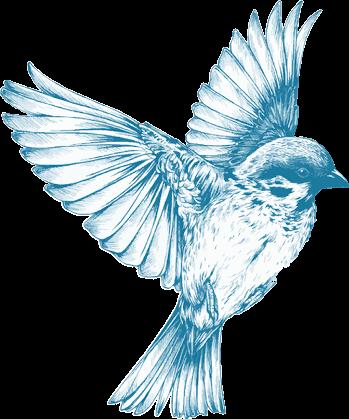 #vintage #bird #pajaro #freetoedit