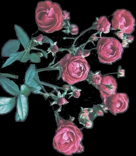 #flowers#FreeToEdit