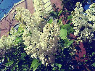 bloom freetoedit
