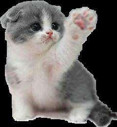 gato freetoedit