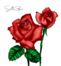rose red redroses drawing draw