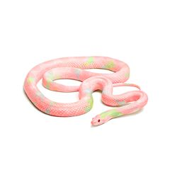 For,this,Sticker,Challenge,,create,#Snakes,Stickers,to,win,the,gold!